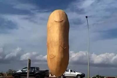 Огромная статуя картофеля на Кипре насмешила пользователей сходством с мужскими гениталиями