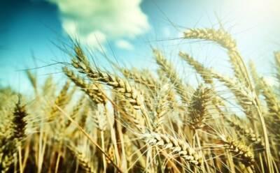 Найдет ли Кипр зерно для покрытия дефицитов?