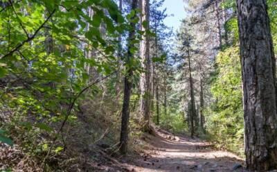 Сохраним кипрский лес