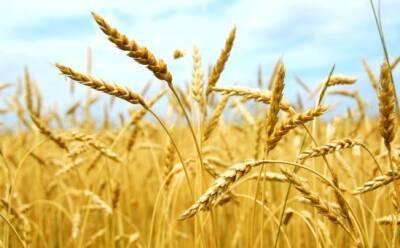 Министр сельского хозяйства: на Кипре нет дефицита зерна