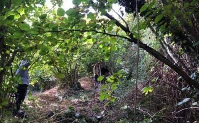 Власти возьмут под защиту ореховый лес в Алоне