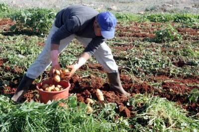 На Кипре обнаружено 17 нелегальных работников