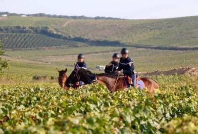 На фермах и виноградниках Кипра выявлено 17 возможных жертв торговцев людьми