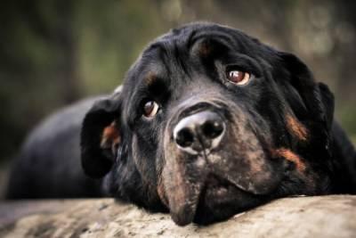 В Айя-Напе публично пытали военную собаку