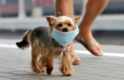 В России произведена первая партия вакцин против COVID-19 для животных