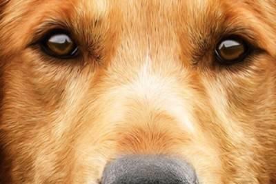 Хеппи-энд для Бруно: избитая собака возвращается в армию Кипра