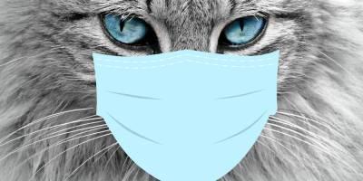 На севере Кипра заразился коронавирусом кот