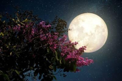 26 мая жители Кипра увидят цветочное суперлуние