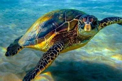 На Кипре найдена мертвая черепаха, привязанная к камням