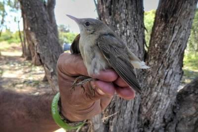 На Кипре зафиксирован значительный рост убийства птиц
