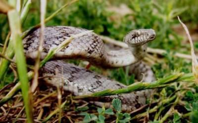 Змеиная весна на острове