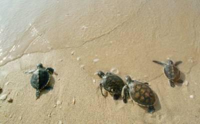 Власти просят не нарушать спокойствие черепах