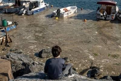 Ахтунг! До Кипра добрались «морские сопли» из Турции