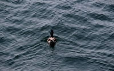 Озеро Сорос отравлено свинцом?