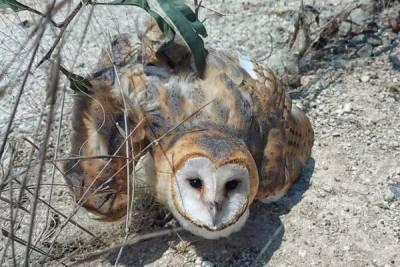 Кипрские зоозащитники спасли «милоту» от мучительной смерти. Фото