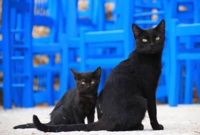 Власти Кипра возобновили программу стерилизации бездомных кошек