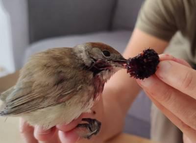 «Птичьи активисты» рассказали, что помогли осудить 49 браконьеров