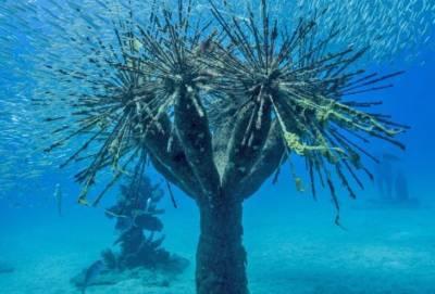 В Айя-Напе создают искусственный подводный лес. Первый в мире