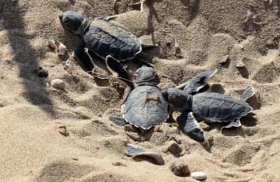 На пляже Аргака, где теперь вылупляются черепахи, нелегально работает бар