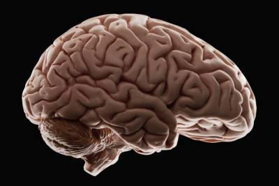 Какие человеческие органы в первую очередь уничтожает коронавирус