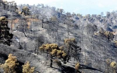 11 разрушительных пожаров в истории острова