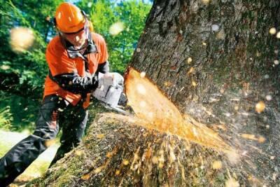 Партия «Зеленых» борется в Пафосе против вырубки дерева