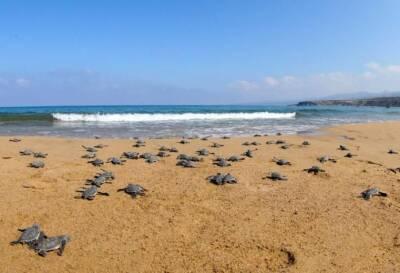 Владельцы нелегальных пляжных баров в Пафосе получили уведомление о переезде