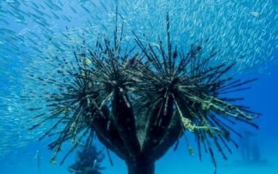 Айя-Напа открывает подводный музей скульптуры