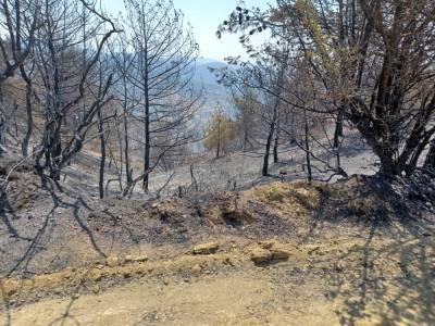 Четыре жертвы из-за пожара
