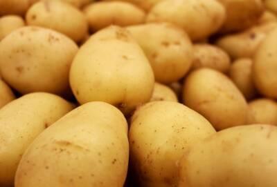 Кипр продает картофель в 26 стран мира