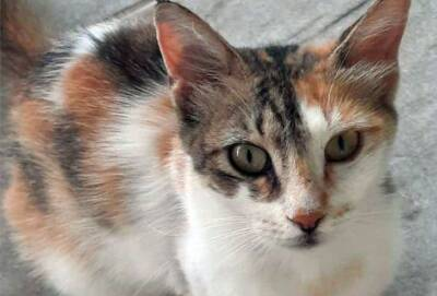В деревне Эргатес жестоко убита кошка
