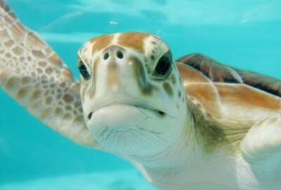 Кусающиеся черепахи выгнали людей из моря возле пляжа Municipal Baths в Пафосе