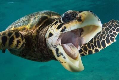 Черепаха-мизантроп продолжает террор пляжей Пафоса