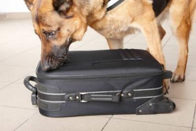 В аэропорту Пафоса эвакуировали пассажиров