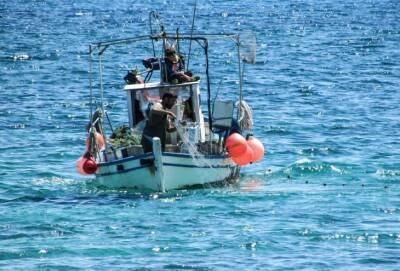 Департамент рыболовства Кипра опроверг наличие у берегов острова рыб-жаб с уровнем агрессии питбулей