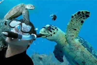 В Пафосе черепаха-мизантроп начала охоту на людей, в больницу поступают первые раненые!