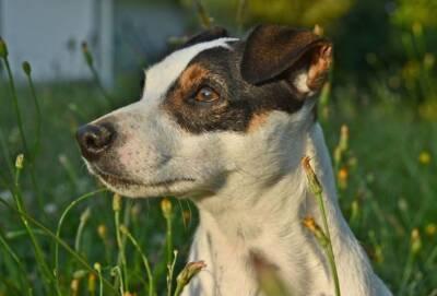 В Лимассоле застрелен щенок